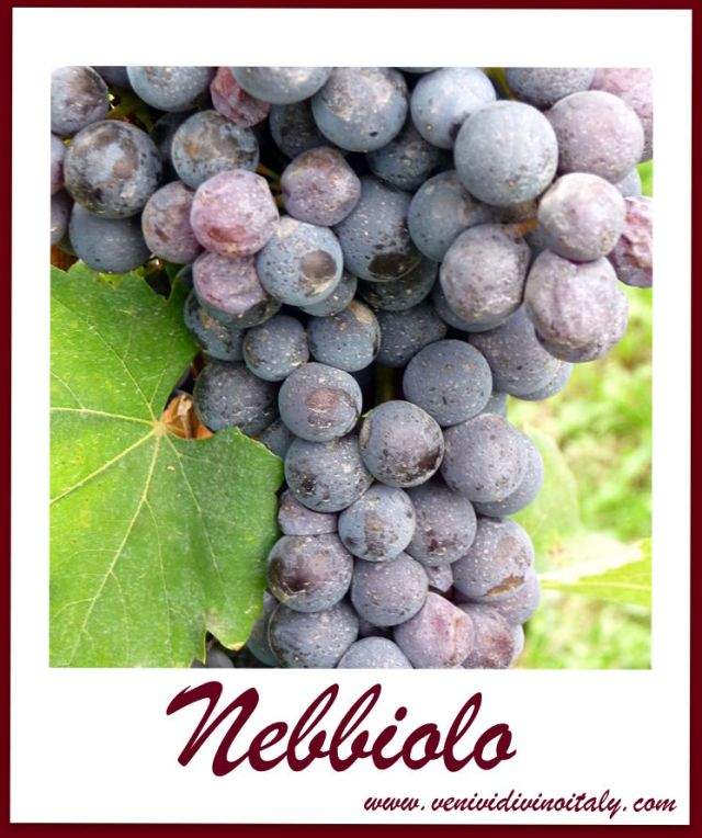 Nebbiolo_cluster